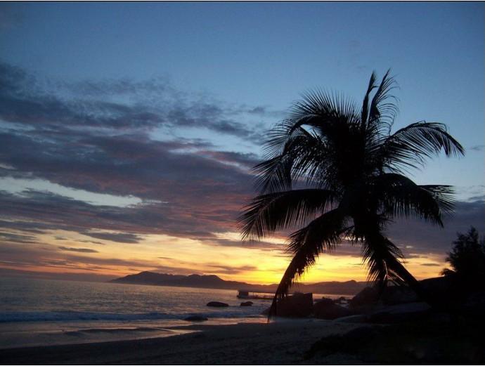 海南三亚椰树林风景