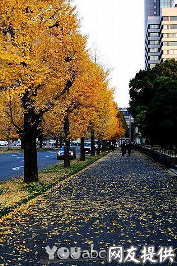 秋天的东京街道