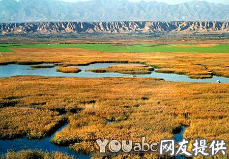 > 鼎湖芦苇荡风景区